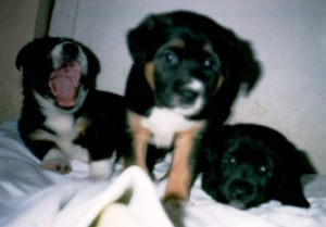 Monkey, Boomer and Blackie