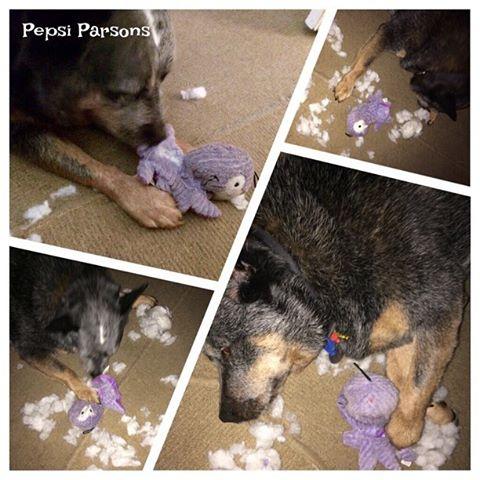 pepsi-parsons-squeaker-surgery
