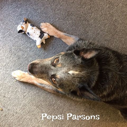 pepsi-parsons-with-her-cow